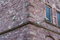 Two Security Cameras on Brick Wall Corner Security Change Archit
