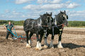Two shire horses ploughing at show Royalty Free Stock Photo