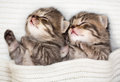Two sleeping baby kitten Royalty Free Stock Photo