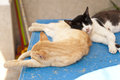 Two sleeping cats samos Royalty Free Stock Image