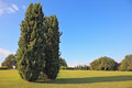 Two slender cypress on a green grassy lawn Stock Photos