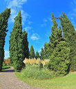 Two slender cypress separated path paved photo made with fisheye lens Stock Photos