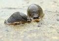 Two slugs on the ground Royalty Free Stock Photo
