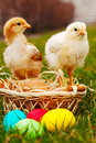 Two small baby chickens with colorful Easter eggs Stock Photography