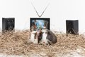 Two small hamsters on white background nice hamster sitting with tv and speakers behind Stock Photo