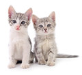 Two small kittens. Royalty Free Stock Photo