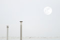 Two smokestacks and the moon while a seagull is flying crossing a grey sky Royalty Free Stock Photo