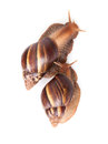 Two snails crawl on white background Stock Image
