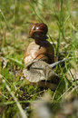 Two snails one on another