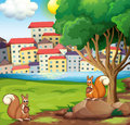 Two squirrels at the riverbank across the village illustration of Stock Photos