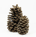 Two Standing Pine Cones Royalty Free Stock Photo