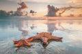 Two starfish on beach Royalty Free Stock Photo