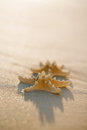 Two starfish on golden sand beach, soft gentle sunrise light col Royalty Free Stock Photo