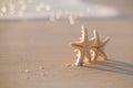 Two Starfish On Sea Ocean Beac...