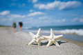 Two starfish on sea ocean beach in florida soft gentle sunrise light color Stock Photography