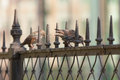 Two starling sits on a metal fence Royalty Free Stock Photo