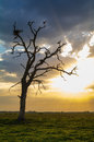 Two stork standing on a dry tree Royalty Free Stock Photo