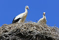 Two storks Royalty Free Stock Photo