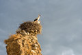 Two Storks in Nest on Ruin in Sunrise Royalty Free Stock Photo