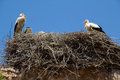 Two storks sitting in a nest Royalty Free Stock Image