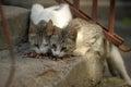 Two stray cats Royalty Free Stock Photo