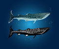 Two style of whale shark with water bubble normal color and silhouette Royalty Free Stock Photos