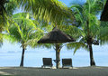 Two sunbeds, umbrella and palms Royalty Free Stock Photo