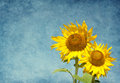Two sunflowers Royalty Free Stock Images