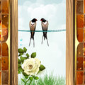 Two swallows in the garden Royalty Free Stock Images