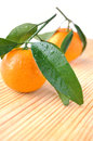 Two tangerines Royalty Free Stock Photo