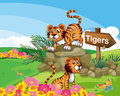 Two tigers beside a signboard illustration of the Stock Photos