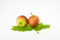 Two tiny apples there are ripe in a leaf Stock Image