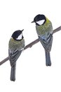 Two titmouse Royalty Free Stock Photo