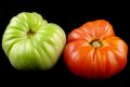 Two tomatoes ripe and unripe on a black background Stock Image