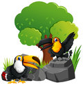 Two toucan birds on the rocks