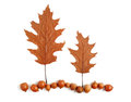 Two trees and the land of acorns and dry oak leaves on a white background Stock Image
