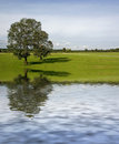 Two trees on meadow Stock Photography