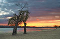 Two trees on the river bank at sunset. Royalty Free Stock Photo
