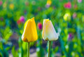 Two tulips in harmony symbolizing at the field love Royalty Free Stock Images