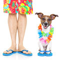 Two on vacation dog and owner ready to go summer Royalty Free Stock Image
