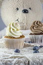 Two vanilla and chocolate cupcakes with blueberries Royalty Free Stock Photo