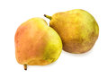 Two vibrant ripe pears with spotty pear skin on white. Royalty Free Stock Photo