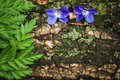 Two violet flowers on the tree bark composition with plant s leaf and barn Stock Photos