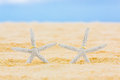 Two wedding rings with two starfish on a sandy tropical beach. Wedding and honeymoon in the tropics Royalty Free Stock Photo
