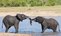 Two wet elephant play in water and greet each other the hot sun Royalty Free Stock Photo