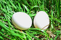 Two White Eggs Royalty Free Stock Photo