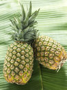 Two whole pineapples Stock Images