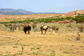 Two wild horses in the desert prairie of new mexico Stock Images