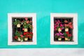Two windows decorated with fresh colorful flowers small Stock Images