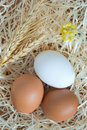Two yellow eggs and one white egg, wheat and yellow flowers Royalty Free Stock Photo